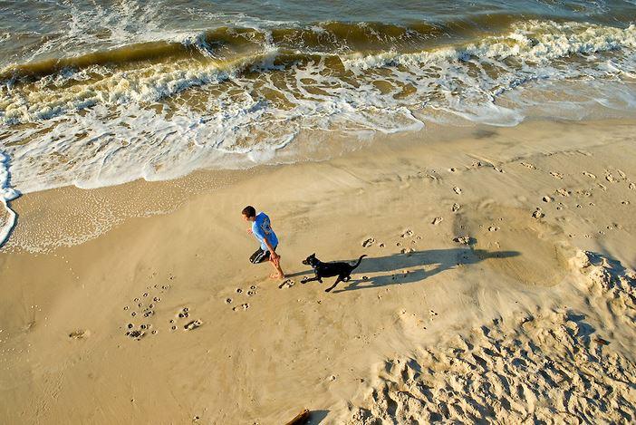 SOMO - dogs on beach