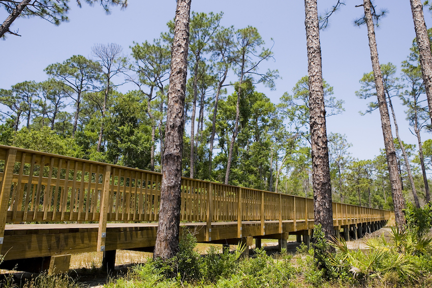 Boardwalk at Back Country Trail